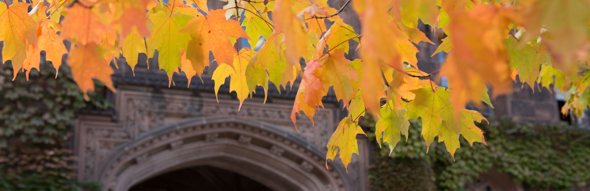 Image of fall foliage on the Princeton campus